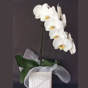 Seasonal flowers supplier in Whangaparoa