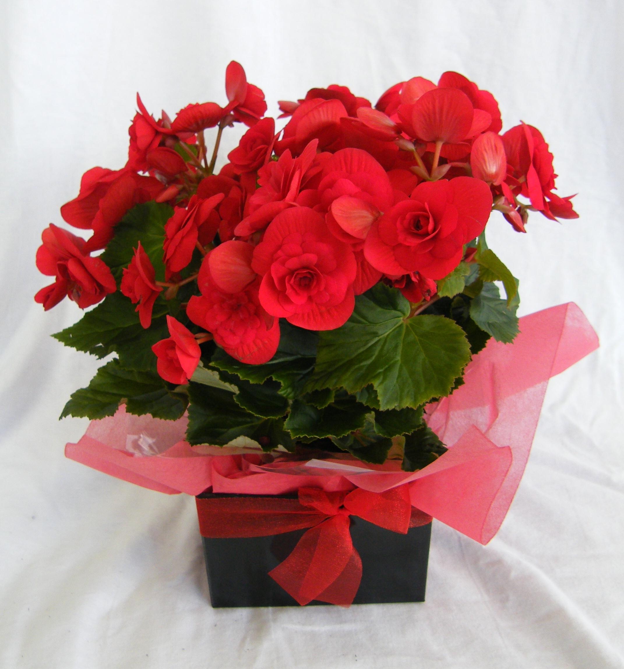 condolence Flowers Suppliers in Orewa